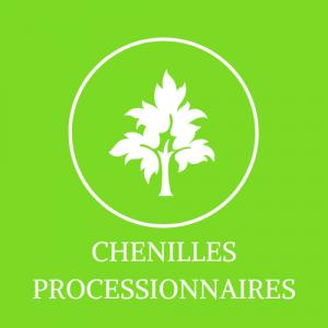 CHENILLES PROCESSIONNAIRES